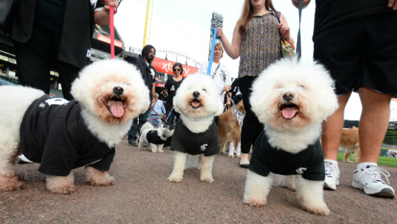 White Sox break world record for most dogs at a sporting