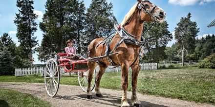 Big Jake is the world's tallest horse