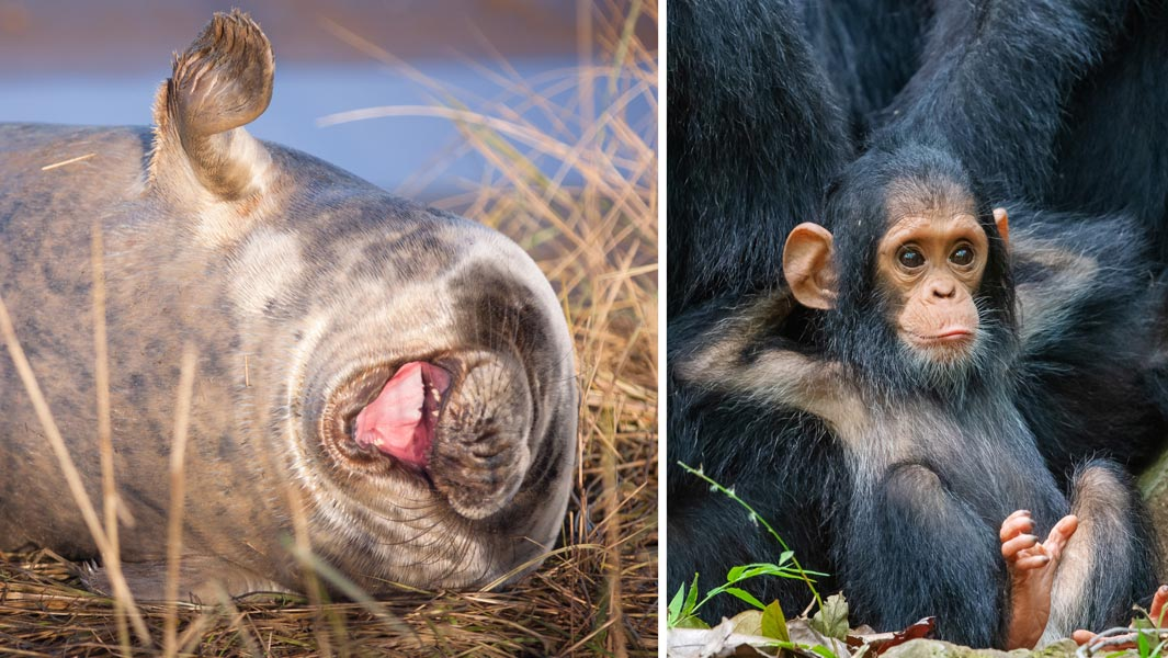 Comedy Wildlife Photography Awards 2019 The Records Behind The Lols Guinness World Records