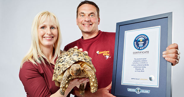 fastest-tortoise-with-owners
