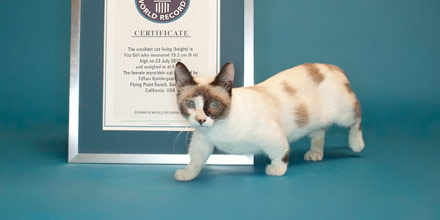 Fizz Girl was the shortest domestic cat living in terms of height