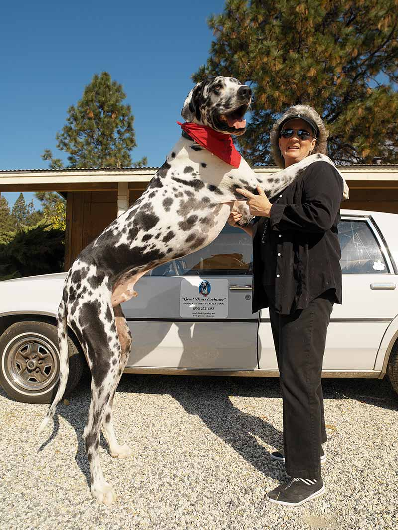 Gibson tallest dog ever - former record holder