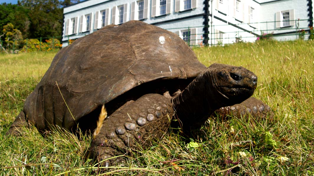 Introducing Jonathan The World S Oldest Animal On Land At 187 Years Old Guinness World Records