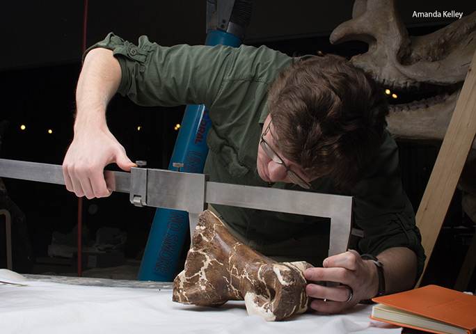 Dr Persons measuring one of Scotty's bones