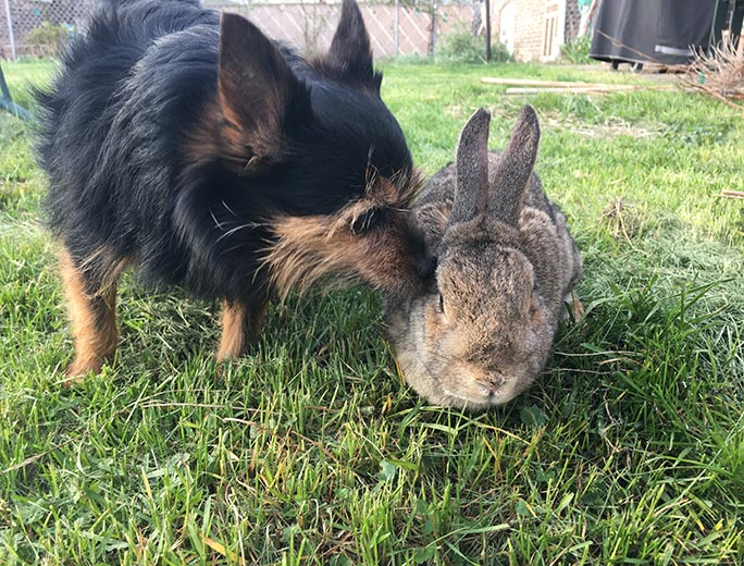 Mick shares his home with two other rabbits and also Sheri the dog