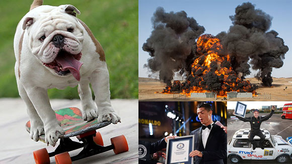 2015 in World Records - November: We celebrated GWR Day with a skateboarding dog and the tightest parallel park