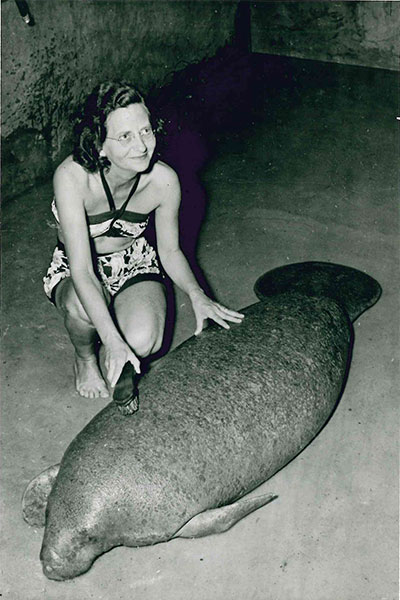 Snooty getting a bath in 1958, with the then-curator of the South Florida Museum, Marjorie Leigh