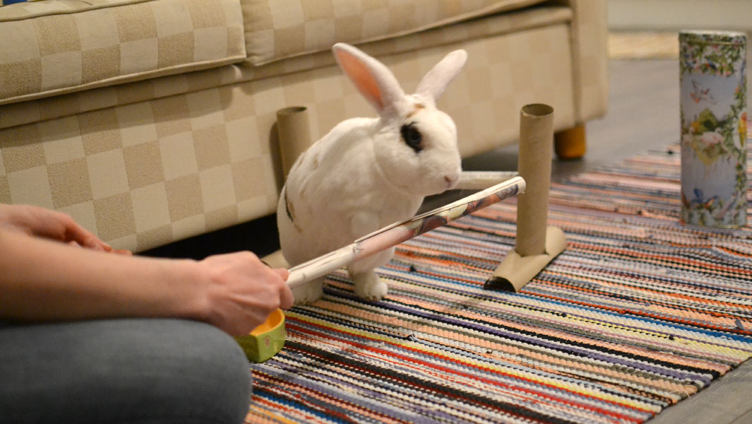 Multi-talented rabbit leaps into the record books   Guinness