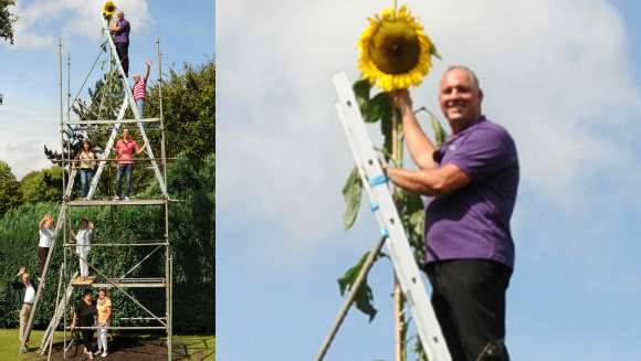 Reach for the sky! Tallest sunflower record falls again for Germany's Hans-Peter Schiffer