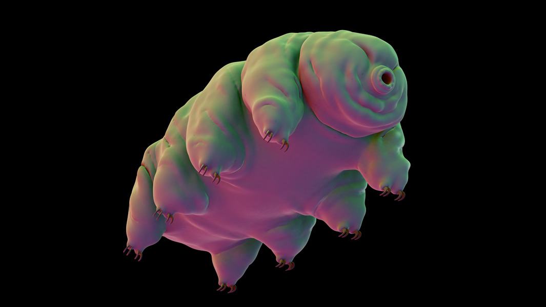 Tardigrades: are these the world's toughest animals?