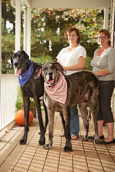 Morgan (right) was owned by Dave and Cathy Payne from Melbourne, Ontario, Canada – here she is pictured meeting her male counterpart, and the tallest dog ever, Zeus
