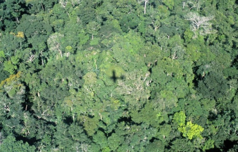 Most forested country (overall area)