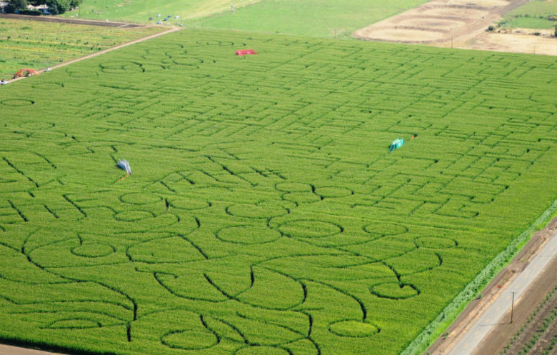 Largest corn / crop maze (temporary)