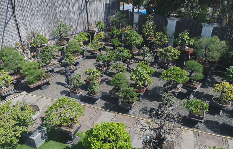 Largest display of bonsai trees