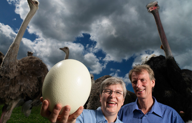 Largest egg from a bird living