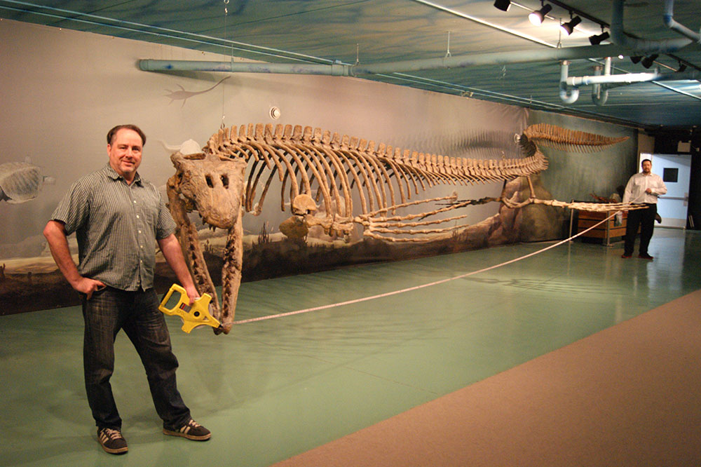 Largest mosasaur on display