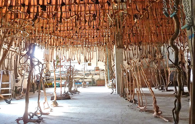 Largest collection of wooden walking canes