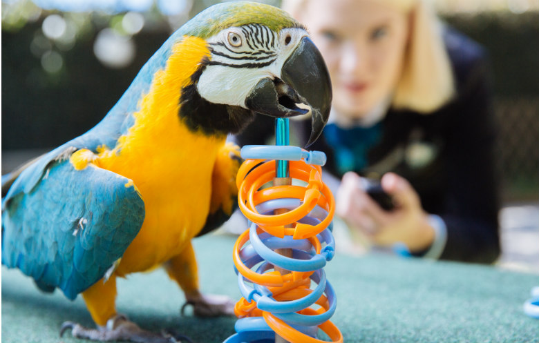Most rings placed on a target by a parrot in one minute