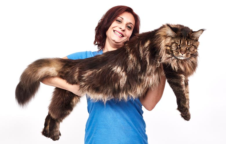 Longest domestic cat living