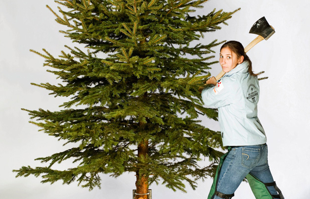 Most Christmas trees chopped in two minutes