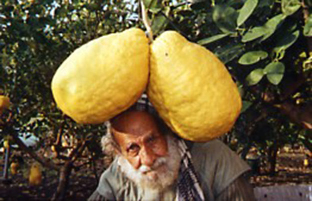 Heaviest lemon