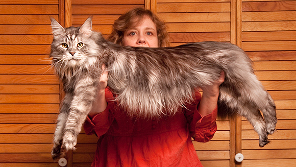 Longest domestic cat (ever)