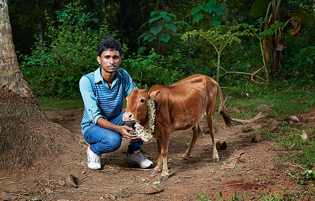 Shortest cow