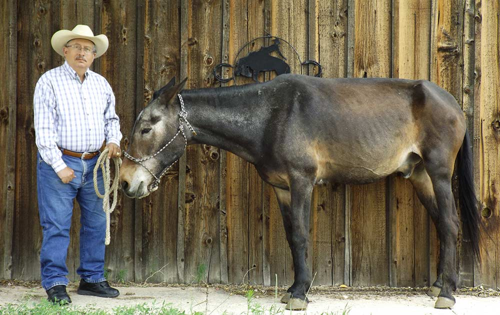 Oldest living mule