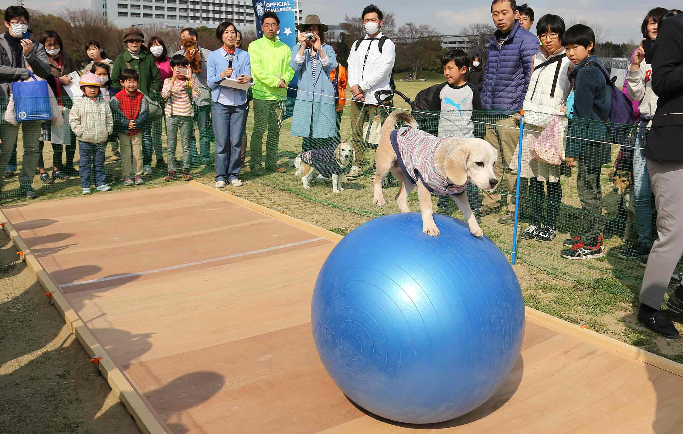 Fastest 10 m travelled on a ball by a dog